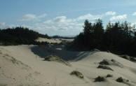 florence oregon sandboarding sand board